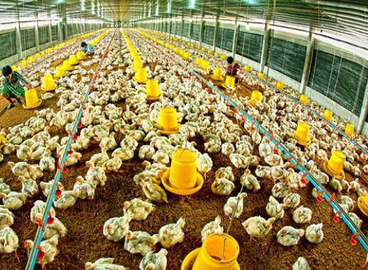 ngành chăn nuôi là gì, ra trường làm gì
