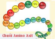 cấu tạo phân tử của peptit