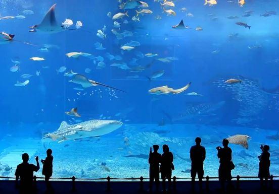 Ngành hải dương học là gì, ra trường làm gì