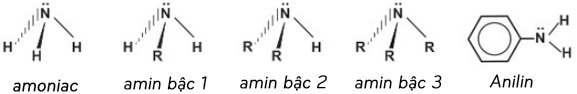 cấu trúc phân tử của amoniac và các amin