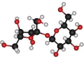 mô hình phân tử của saccarozo