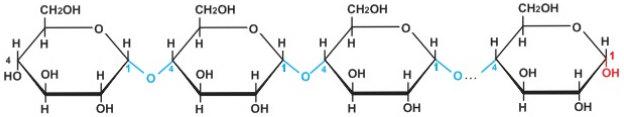 cấu tạo phân tử của tinh bột