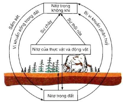 chu trình của nito trong tự nhiên